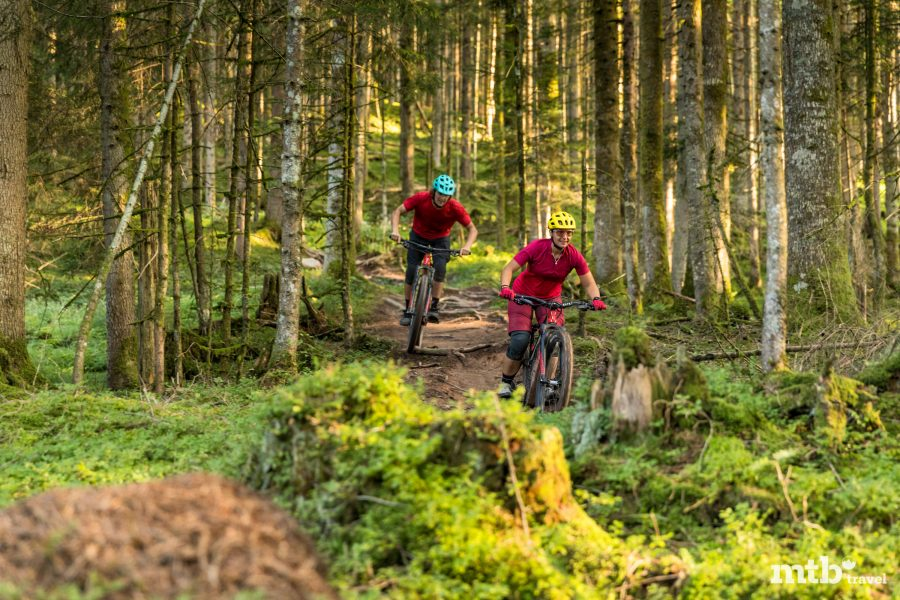 Wurzel Singletrail Trail Tirol Kitzbühel