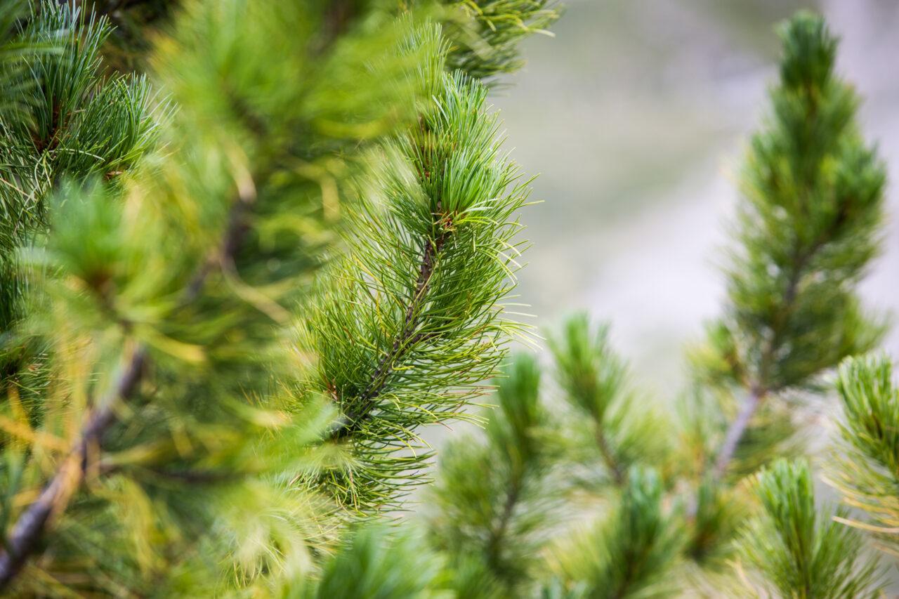Klimawandel in der Bergen Bäume und Grenzen