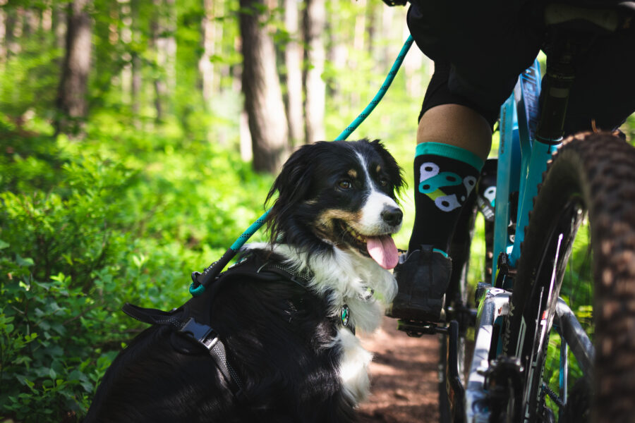Traildog Ausbildung